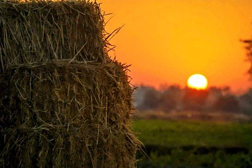 Village, Hay, Agriculture, Wheat, Harvest, Summer, Farm