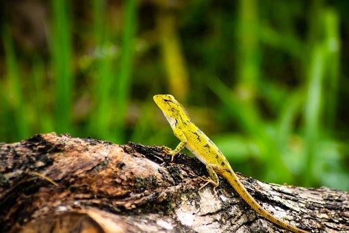 Chameleon, Background, Isolated, Green, Animal, Nature