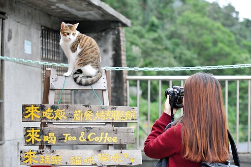 Cat, Taiwan, Photo, Landscape, Break, Cuteness, Kitty