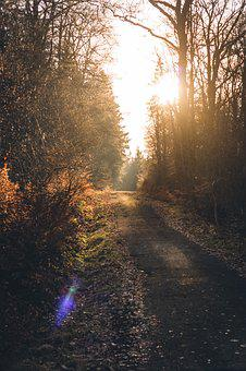 Forest, Forest Path, Sun, Backlighting, Lensflare