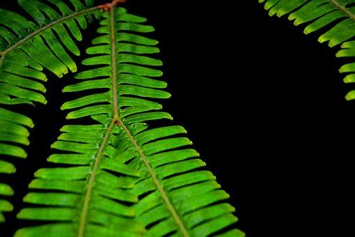 Branch, Elecho, Green, Garden