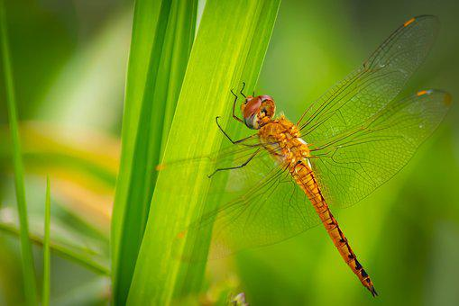 Dragonfly, Background, Green, Isolated, Nature, Fly