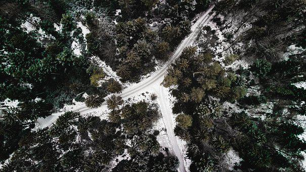 Forest, Drone, Landscape, Nature, Trees, Green