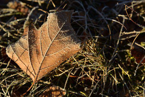 Leaf, Maple Leaf, Concerns, Ground, Winter, Season