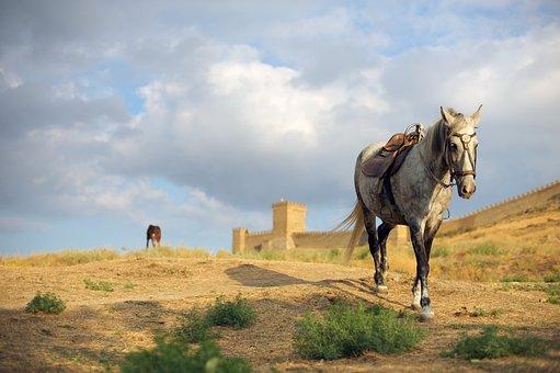 Russia, Crimea, Sudak, Horse, White, Nature, Fortress