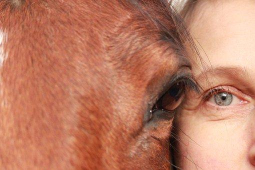 Horse, Horses, Animals, Nature, Eyes, Human, Portrait