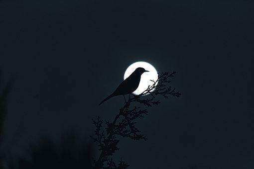Moon, Planetary Moon, Moonlight, Lunar, Night, Bird