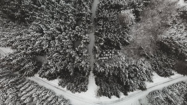 Forest, Drone, Landscape, Air, Trees, Green, Top, Snow