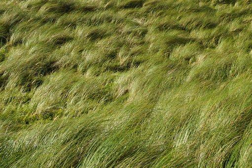Dune, Grass, Wind, Texture, Structure, Background