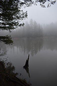 Fog, Trees, Water, Wallpaper, Forest, Nature, Landscape