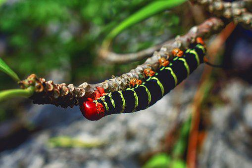 Worm, Nature, Animal, Branch, Black, Red