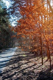 Forest, Tree, Foliage, Konary, Red, Autumn, Winter