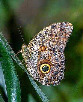 Butterfly, Tropical, Insect, Exotic, Wings, Nature