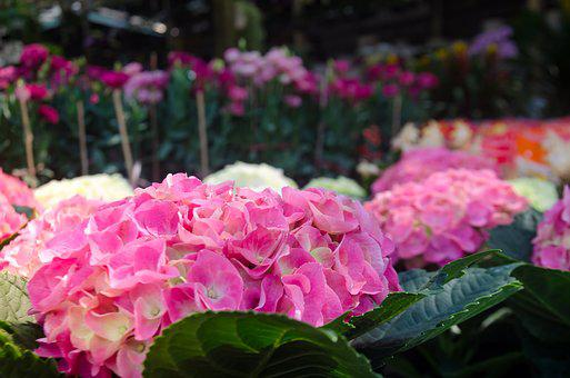 Beautiful Flowers, Background, Natural, Flaunted, Color
