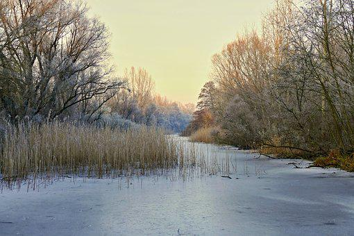 Nature, Country, Winter, Pond, Frozen, Frost, Tree