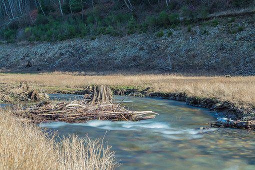 River, Creek, Water, Dam, Woods, Forest, Park, Nature
