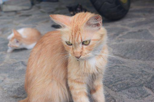 Cat, Moody, Angry, Animal, Look, Cute, Outdoor, Fluffy