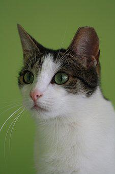 Cats, Adoption, Cat, Eyes, Domesticated, An Interesting