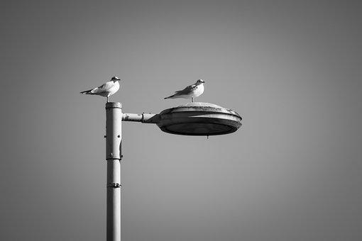 Gulls, Lantern, Watch, Look, Overview, Sit, Birds