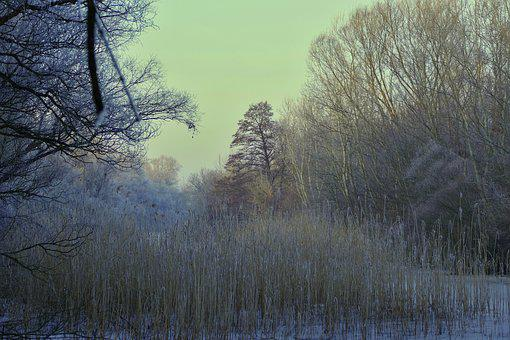 Forest, Nature, Winter, Trees, Frost, Ice