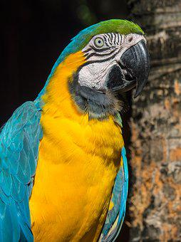 Parrot, Colorful, Tropical, Exotic, Animal, Color