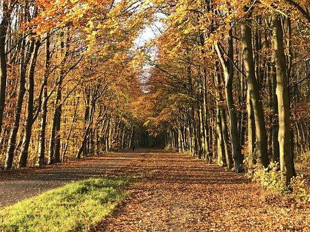 Autumn, Avenue, Nature, Park, Trees, Scenic
