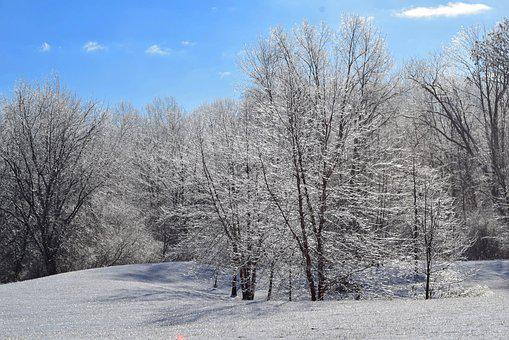 Snow, Winter, Frost, Forest, Trees, Ice, Cold, Nature