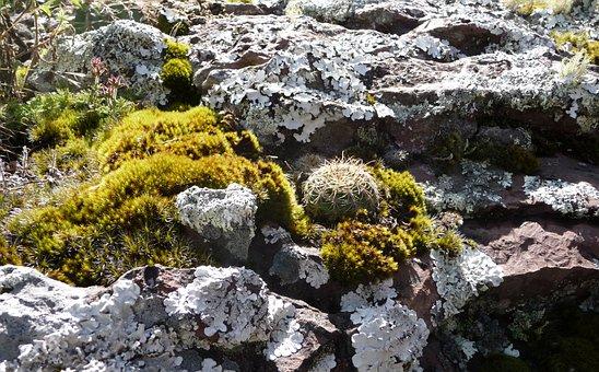 Rock, Stone, Nature, Stones, Cacti, Sandstone, Geology