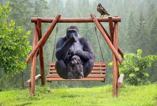 Gorilla, Leisure, Swing, Fantasy, Mother And Child