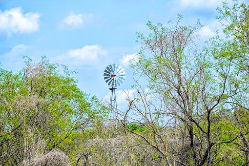 Texas Landscape, Windmill, Mesquite Tree, Texas