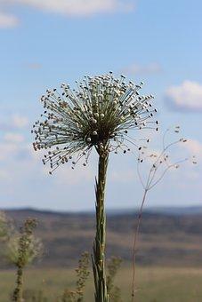 Nature, Flower, Always Alive, Field, Plant, Minas