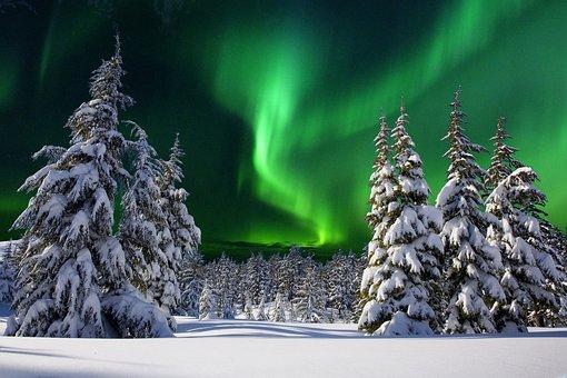 Aurore Boreale, Night, Snow, Fir, Winter, Nature
