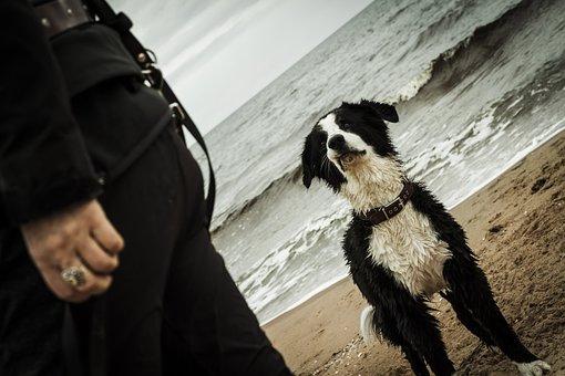Dog, Sea, Beach, Water, Sand, Pet, Animal, Ocean, Run