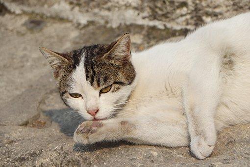 Cat, Cats, Beautiful, Cute, Animal, Animals, Sweet