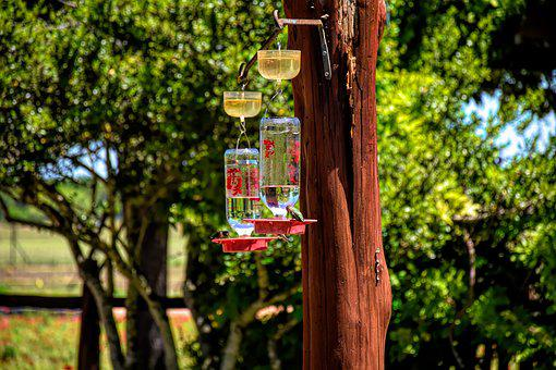 Hummingbirds, Feeder, Bird, Wildlife, Nature, Flying