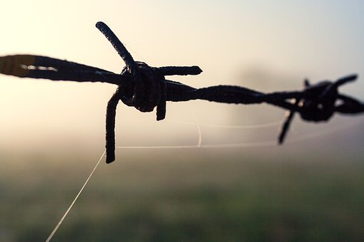 Barb Wire, Bodies, Fence, Metal, Border, Security