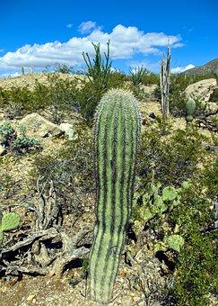 Columnar Saguaro, Cactus, Arizona, Desert, Landscape