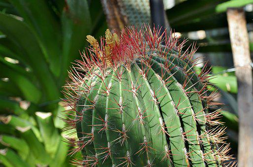 Cactus, Prickly, Desert Plant, Thorns, Spur, Desert