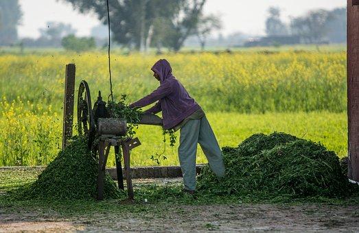 Cutter, Labor, Machine, Work, Tool, Farm, Farm Life