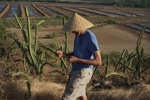 China, Chinese, Rice, Field, Farmer, Agriculture