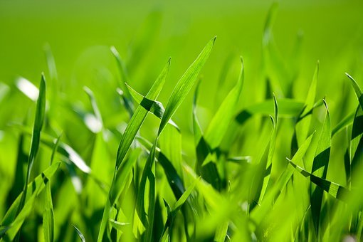 Grass, Green, Nature, Meadow, Background, Wallpapers
