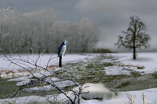 Bird, Winter, River, Cold, Snow, Animal, Landscape