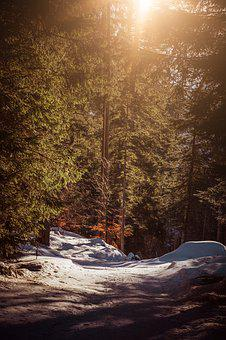 Nature, Away, Forest, Trees, Light, Snow, Wintry