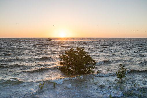 Sunset, Lone Tree, Waves, Boat, Nature, Scenic