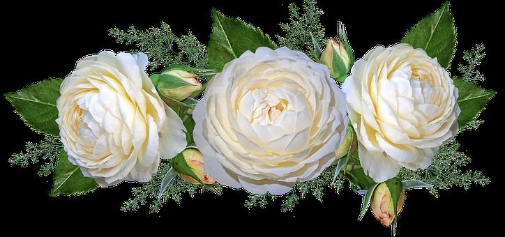 Flowers, Roses, White, Garden, Nature
