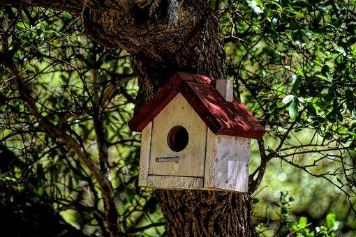 Birdhouse, Outdoors, Bird, Garden, Nature, Nest