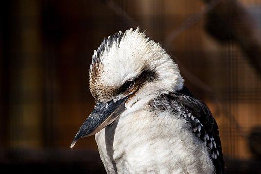 Bird, Animal, Animal World, Bill, Nature, Plumage
