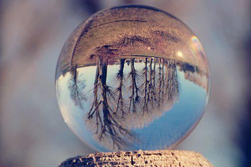 Glass Ball, Trees, Row Of Trees, Upside Down, Ball