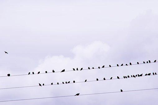 Birds, Stare, Songbird, Power Line, Bird, Star, Feather