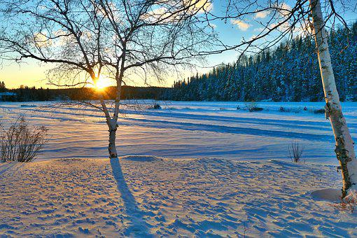 Sunset, Landscape, Winter, Nature, Cold, Snow, Birch